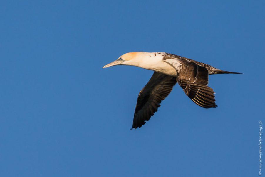 oiseau australie mer