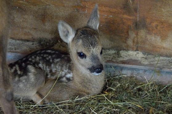 """< img src=""""https://www.la-notizia.net/bambi"""" alt=""""bambi"""""""