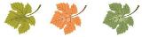 L'attribut alt de cette image est vide, son nom de fichier est Feuilles-de-vignes_1.png.