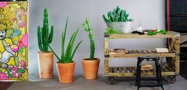 la-grande-serre-concept-plante-a-domicile