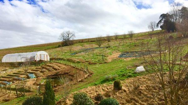 Une journée dans le jardin en permaculture de La Source dorée