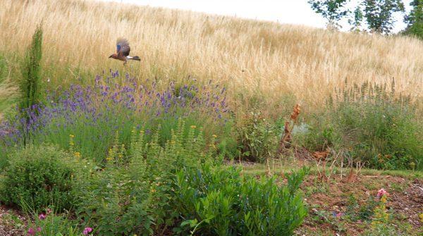 Eco site au service de la biodiversité près de Lyon
