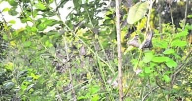 Detectan hongos en la yerba