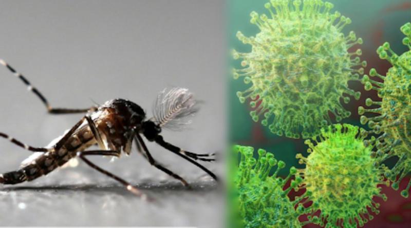 Covid y dengue podrían provocar una sindemia