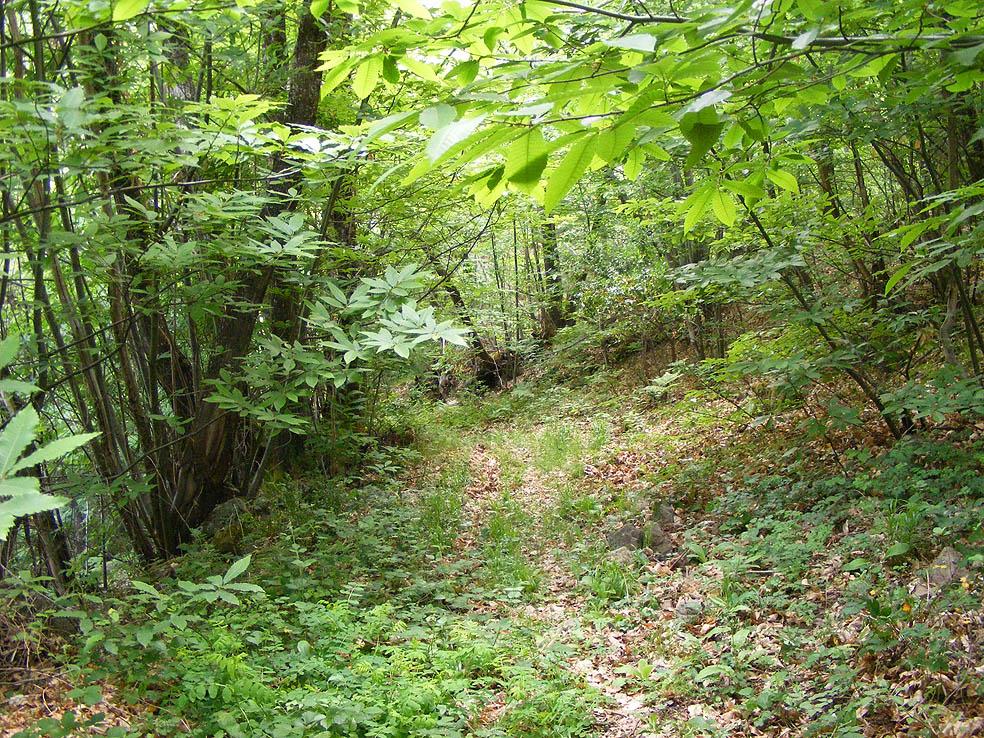 El bosque en su esplendor