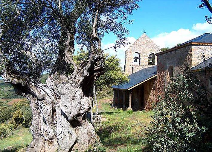 Iglesia de Santiago y olivos centenarios