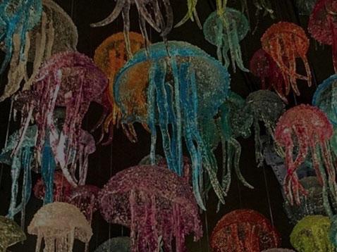 jellyfish - Home