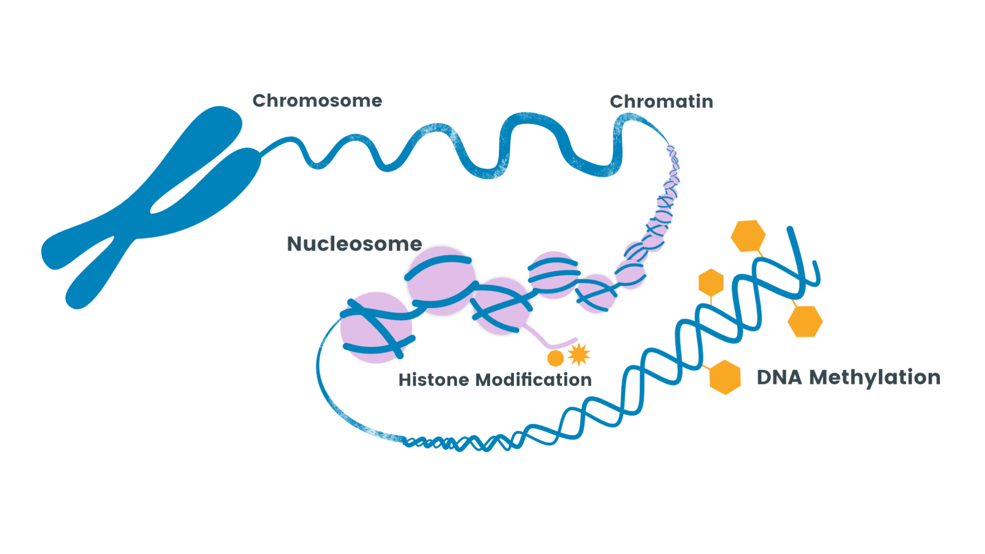Role of DNA methylation in Disease | Labclinics