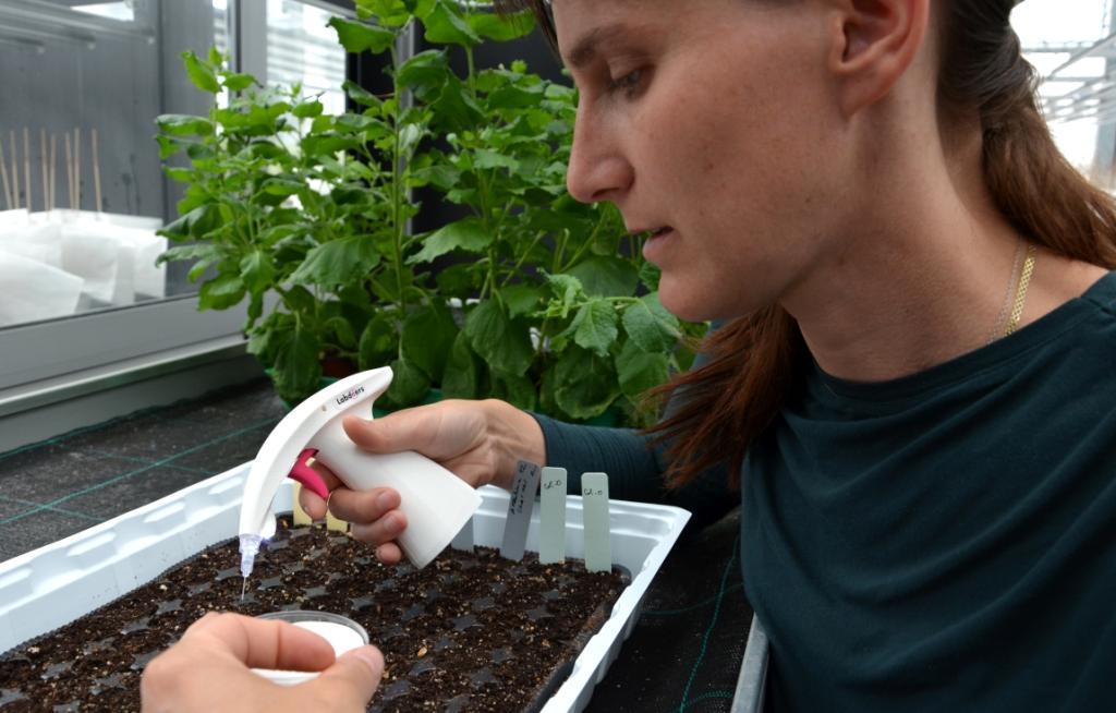 seeding by GentleGrab