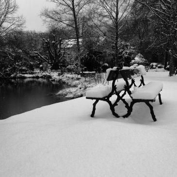 Winterly Elfenau Park by Ka L-O-K