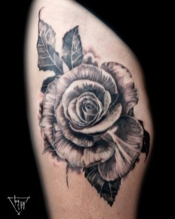 Rose | Guy Labo-O-Kult