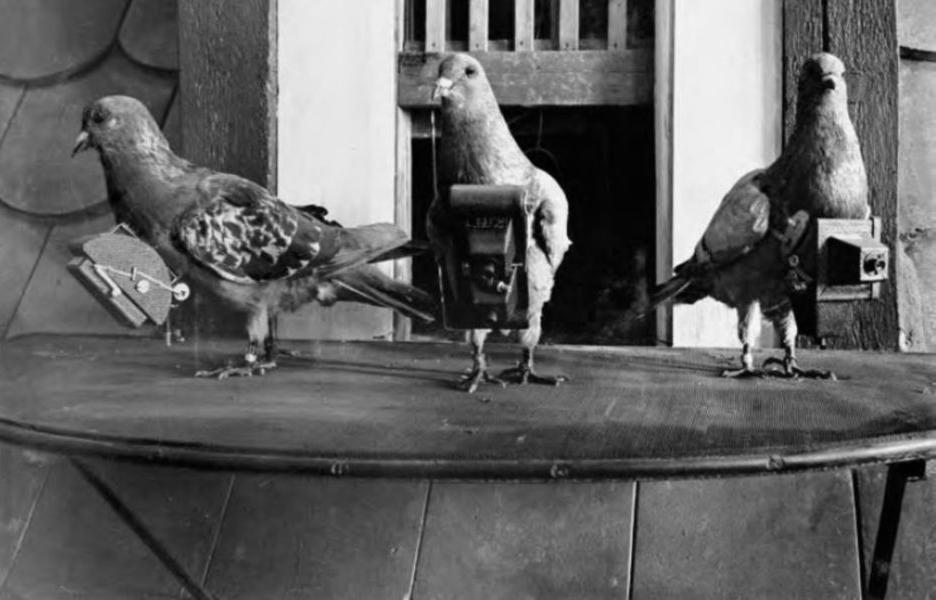 pigeon camera photographie aerienne 01 Des pigeons photographes pour la reconnaissance aérienne