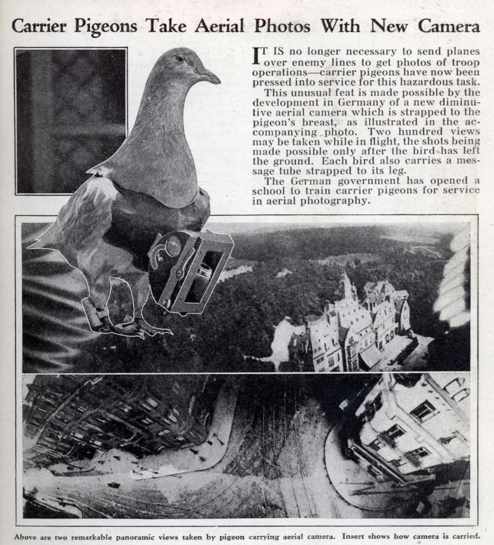 pigeon camera photographie aerienne 081 Des pigeons photographes pour la reconnaissance aérienne