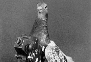 pigeon camera photographie aerienne 09 Des pigeons photographes pour la reconnaissance aérienne