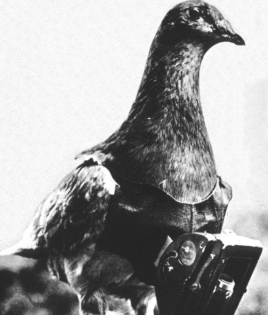 pigeon camera photographie aerienne 10 Des pigeons photographes pour la reconnaissance aérienne