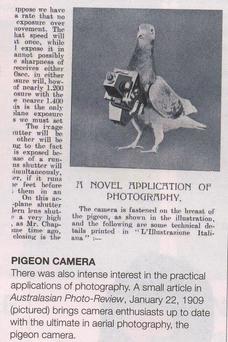 pigeon camera photographie aerienne 12 Des pigeons photographes pour la reconnaissance aérienne