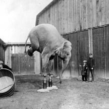 L'histoire d'un éléphant