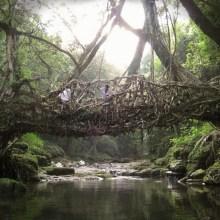 Des ponts en racines