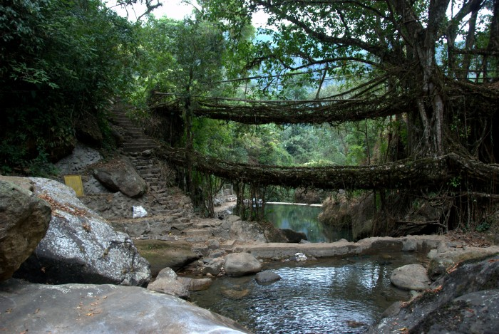 meghalaya pont racine 03 700x469 Des ponts en racines video photo lieux information a title=