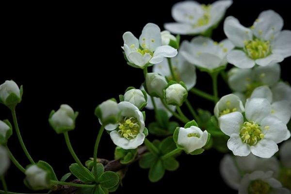 L Ouverture Des Fleurs
