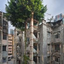 Les arbres de Hong Kong