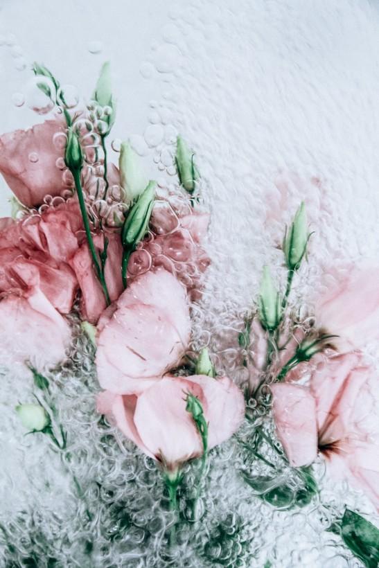 des fleurs a l eau petillante