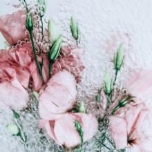 Des fleurs à l'eau pétillante