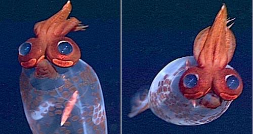 calamar-transparent-houpette-03
