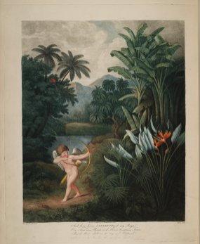 temple-fleur-divers-Robert-Thornton-04