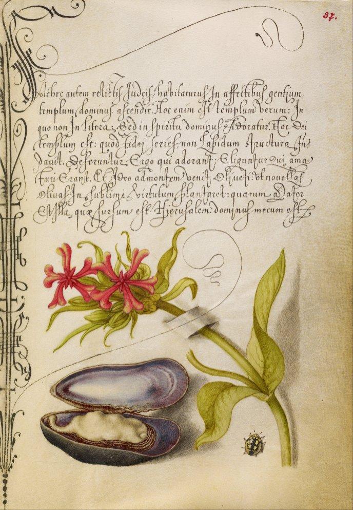 Mira-calligraphiae-monumenta-21