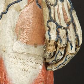 modele-anatomique-docteur-Auzoux-1820-08