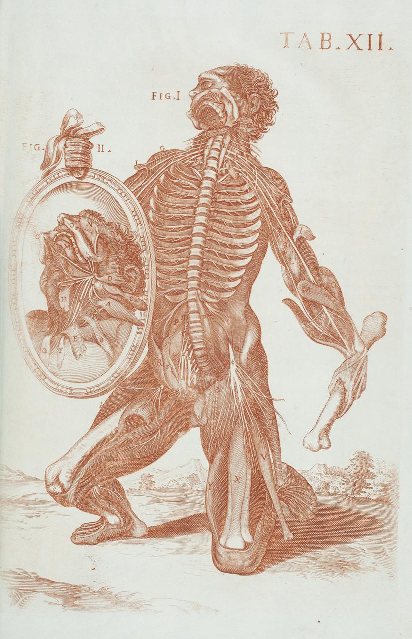 illustration-medicale-biologie-24