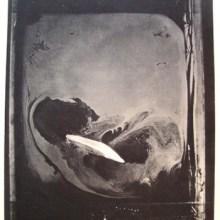 Les premières photographies d'une odeur