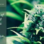 Cannabis, un fito-MOLTO-complesso