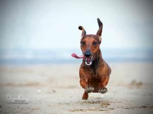 photo of dog on the beach