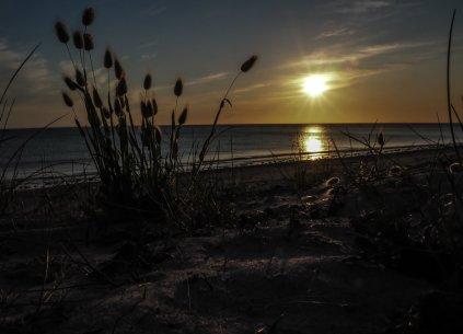 Strandgras in der Abendsonne (1 von 1)-w1280