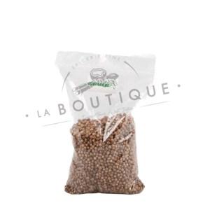 graine de coriande