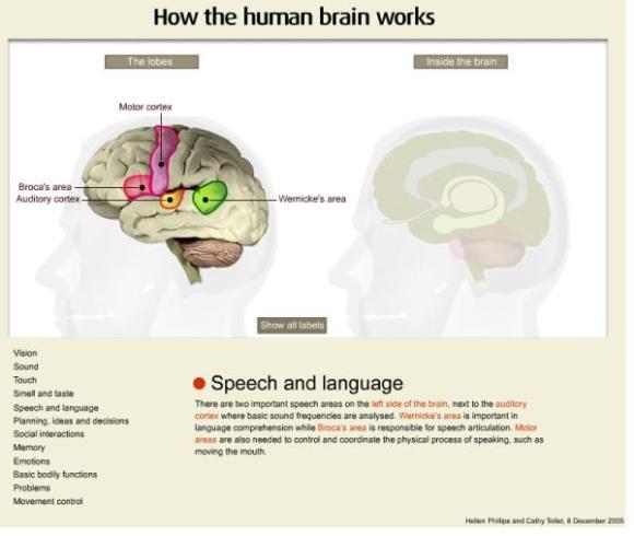 how human brain works.jpg