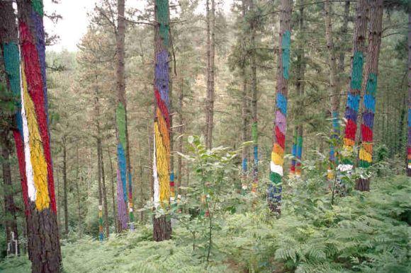 Colores Ibarrola bosque Oma