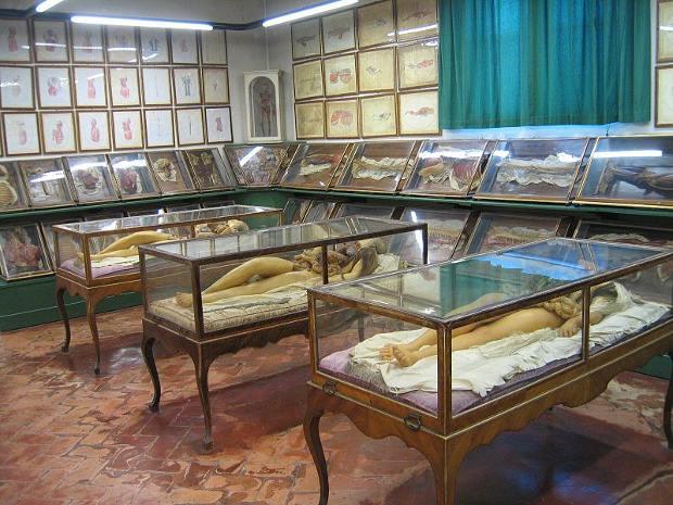 Asombroso Museo historia Natrual Specola Florencia