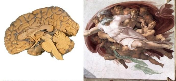Cerebros ocultos en la Capilla Sixtina