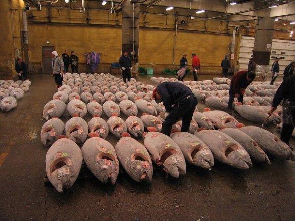 Mercado pescado Tsukiji