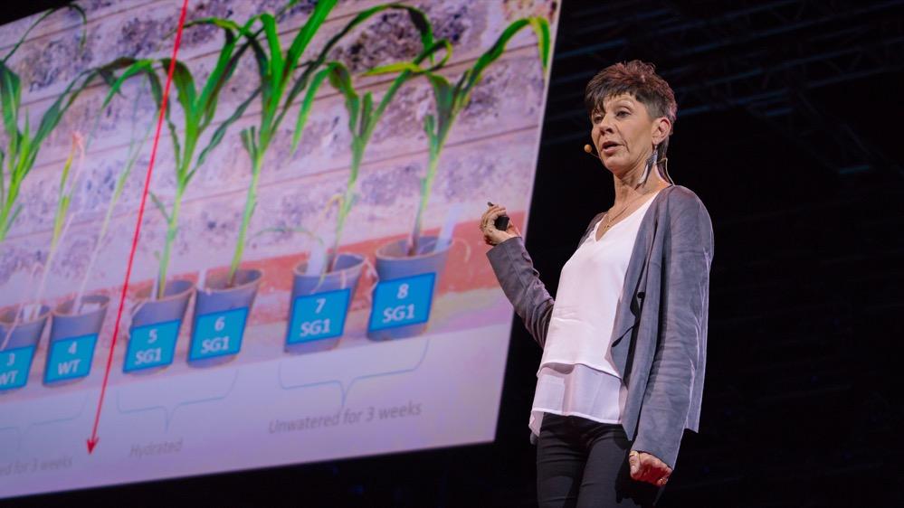 Descubren plantas africanas que resucitan con el agua