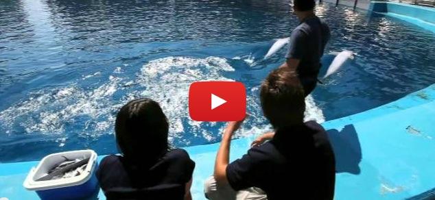 Entrenador por un día en el Oceanográfic de Valencia