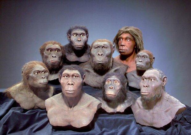 SRGAP2, el gen de la hominización