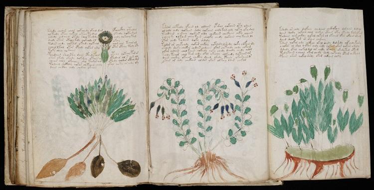 Un nuevo estudio sobre el misterioso manuscrito Voynich