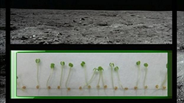 La NASA plantará nabos en la Luna