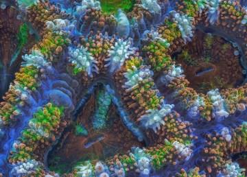 Slow Life, un timelapse que muestra los corales a otra velocidad 1