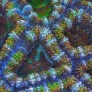 Slow Life, un timelapse que muestra los corales a otra velocidad