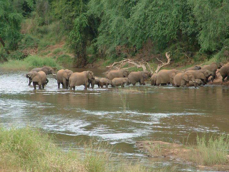 Elefantes, los meteorólogos del mundo animal